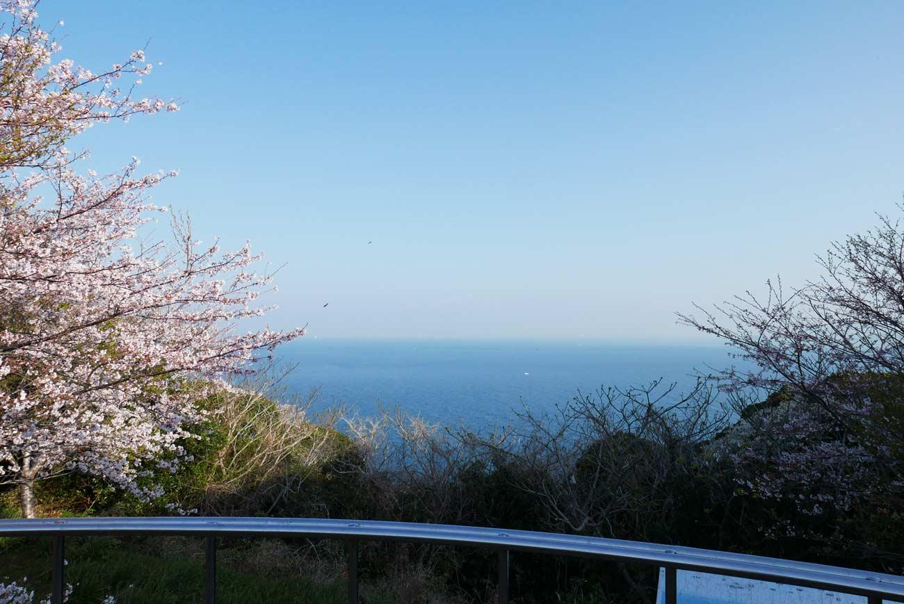 大房岬第一展望台の桜の画像
