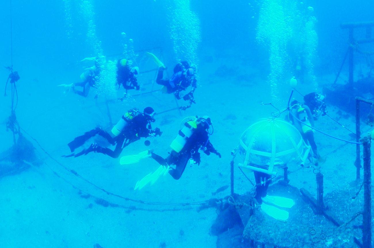 海中を泳ぐダイバーの画像2