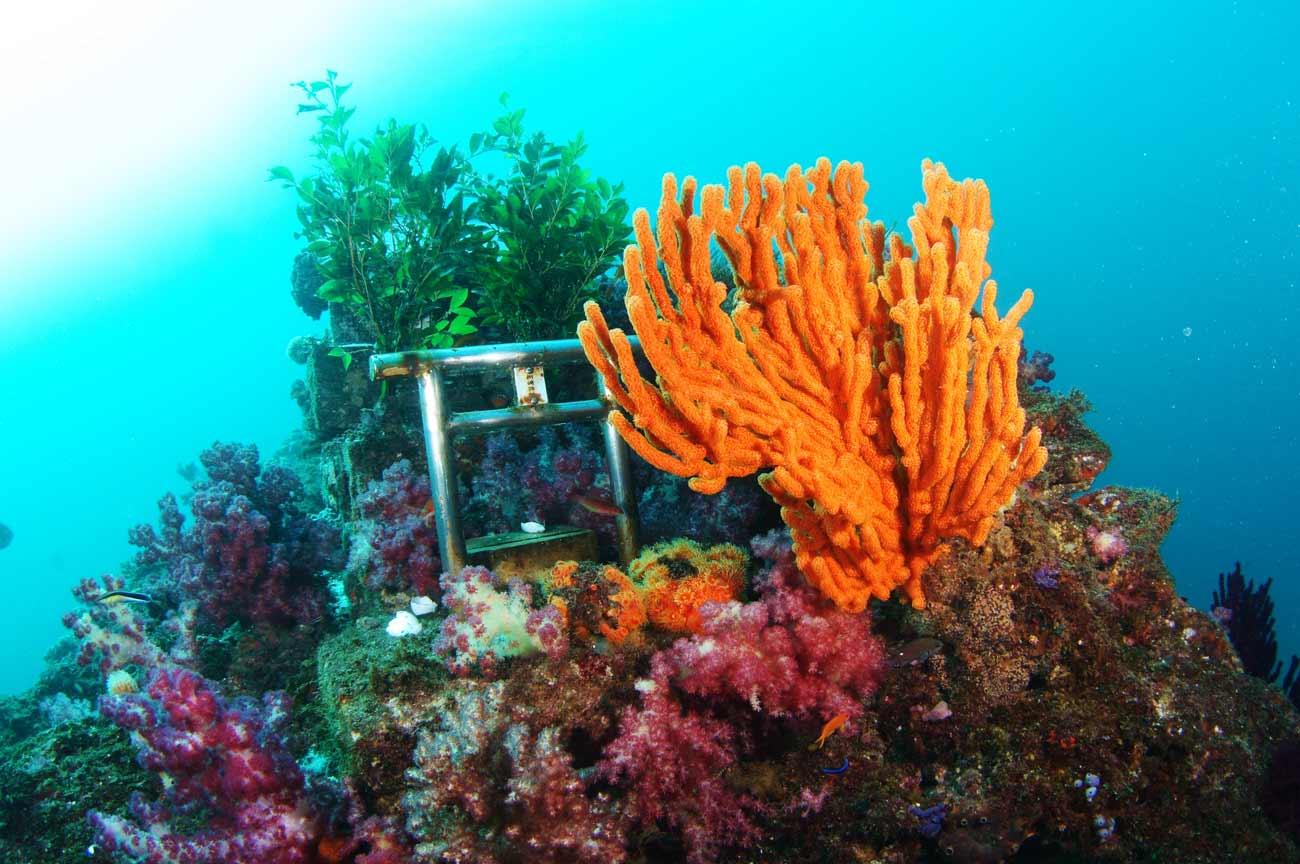 海底神社のサンゴの画像