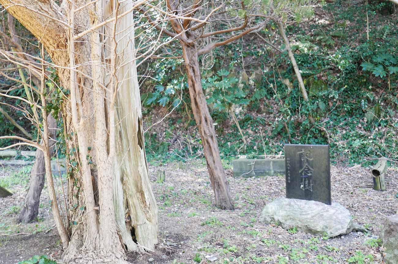 記念樹の碑の画像