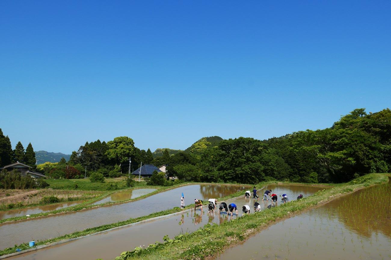 鴨川自然王国の田植えの様子