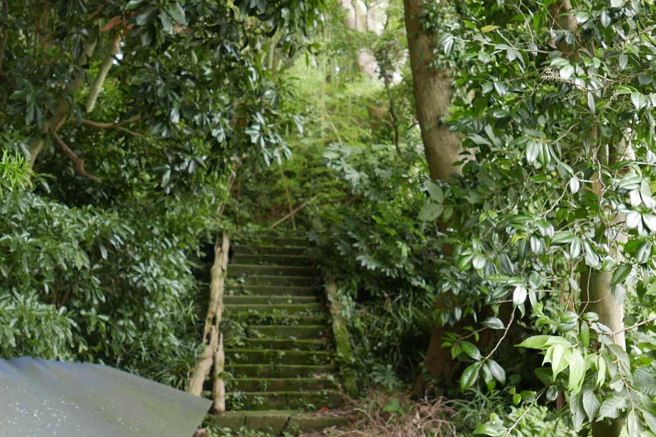 ホルトの木入り口の階段の画像