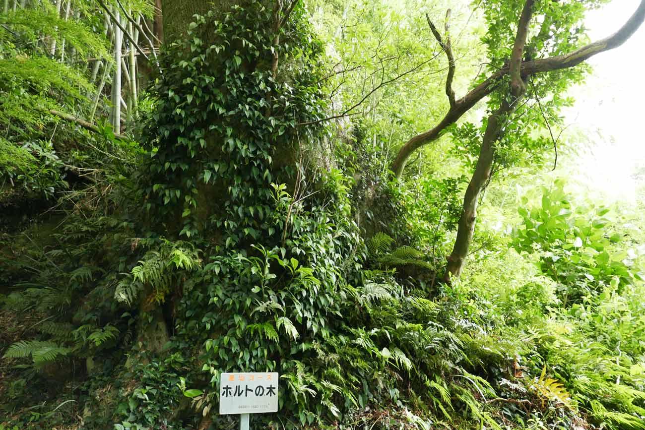 ホルトの木のアップ看板