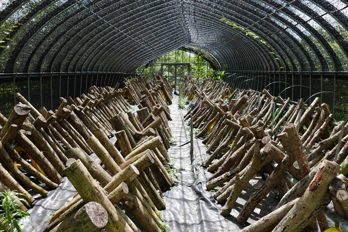富浦作業所のしいたけ栽培の画像