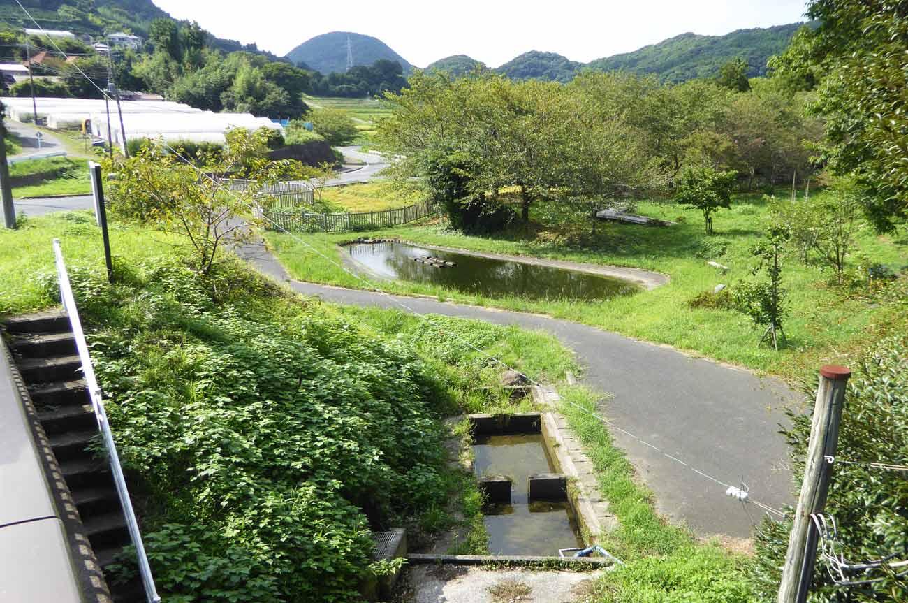 吉井農村公園の親水池の画像