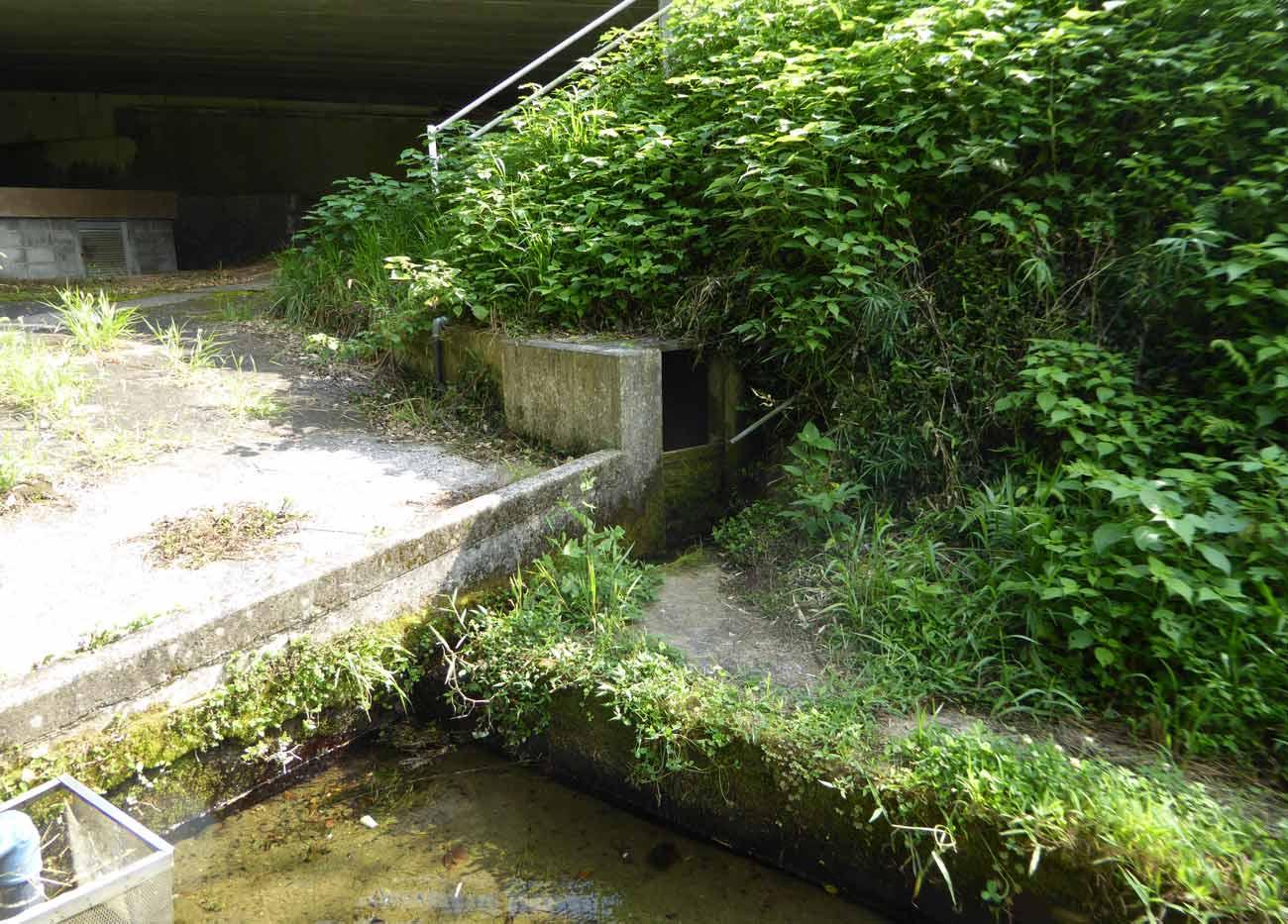 親水池の水源の画像