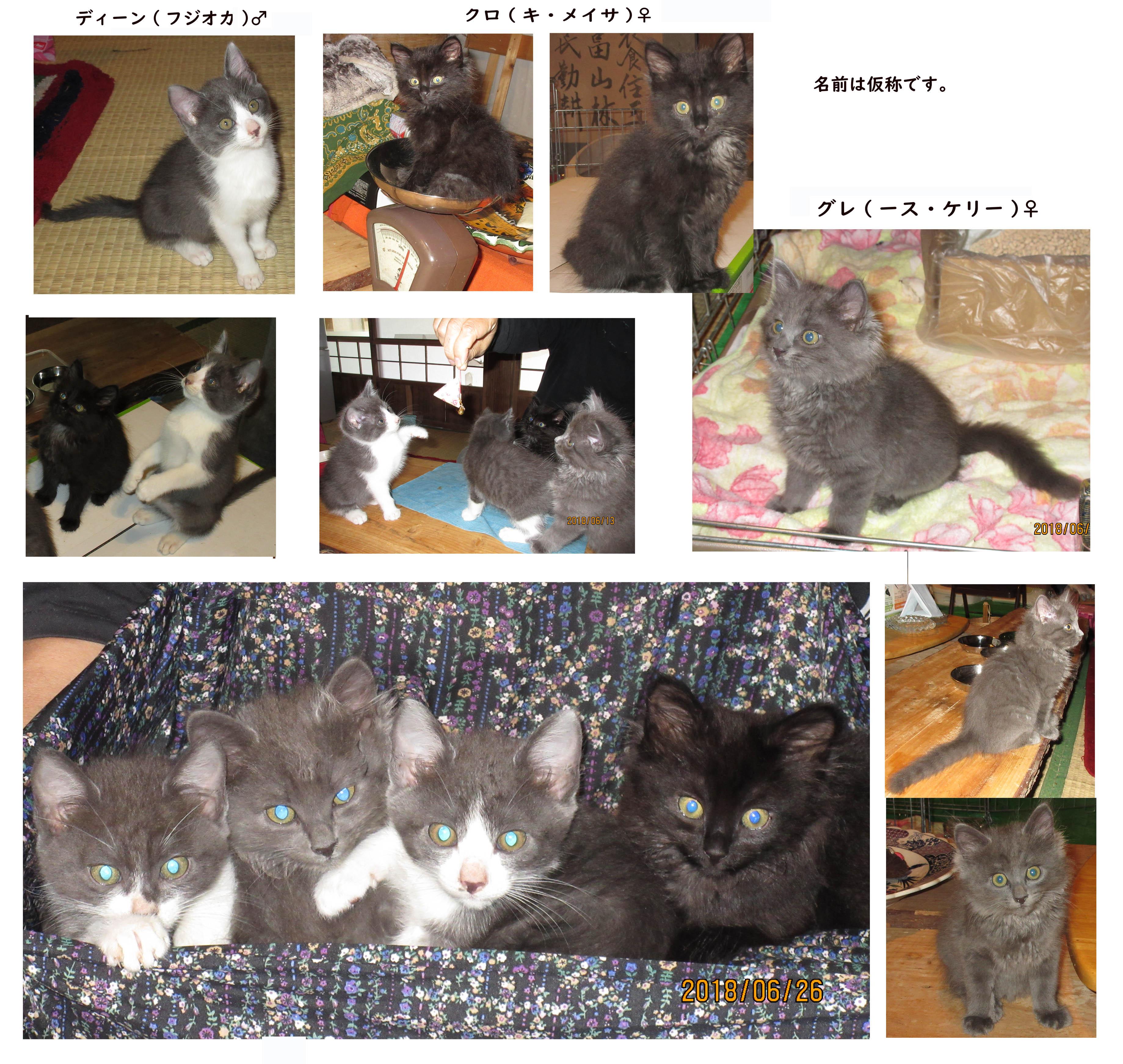 里親募集の猫の画像