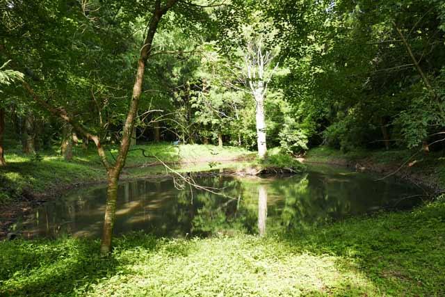 丸郷神社境内の池の画像