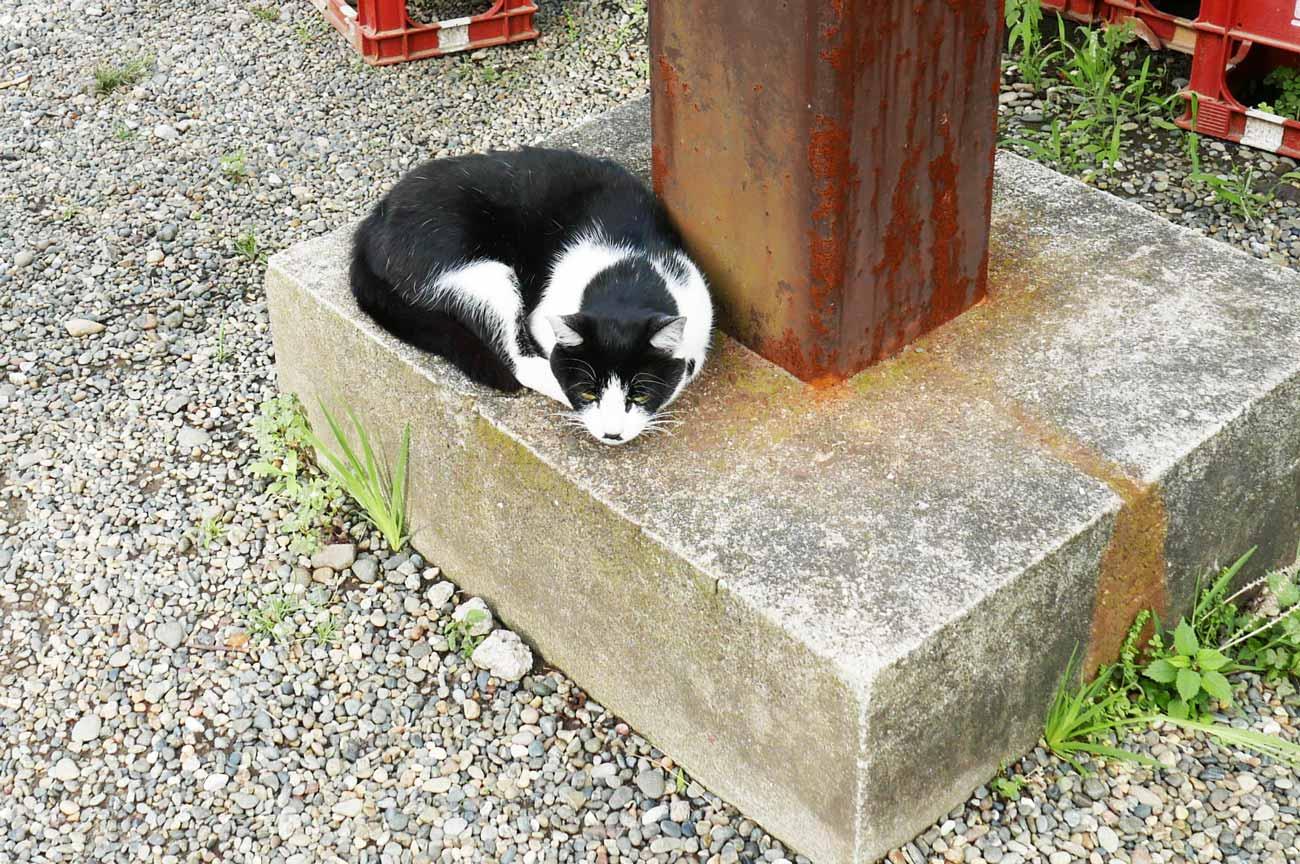 濃溝の滝おみやげセンターの猫の画像