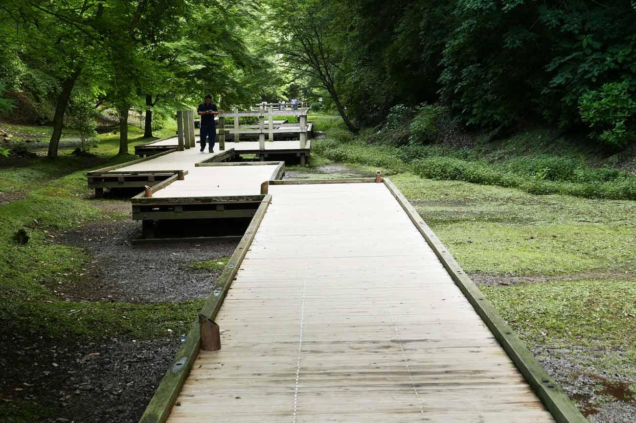 ホタル鑑賞スポットの木道の画像