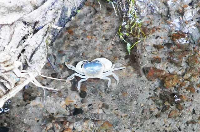 木道の下の沢蟹の画像