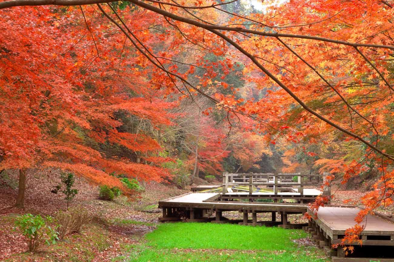 木道の紅葉の画像