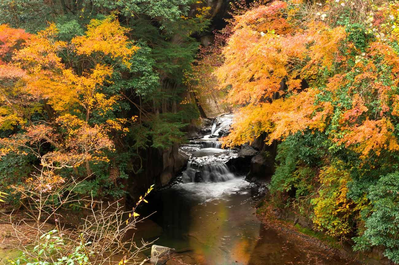 亀岩の洞窟の紅葉の画像