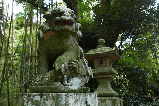 大井神社狛犬(左)の画像