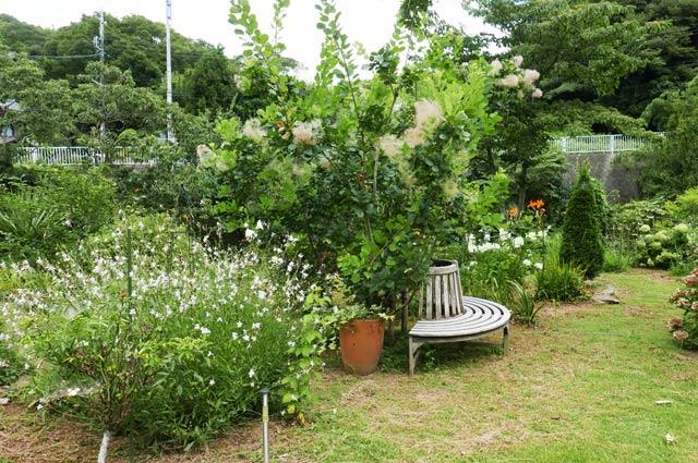 ルーラルガーデン・カフェの庭の画像