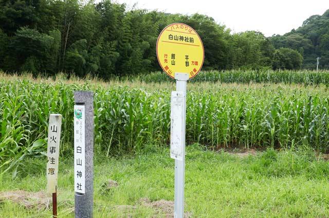 白山神社前のバス停の画像