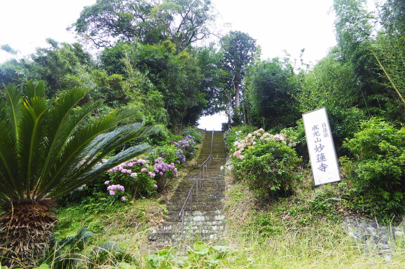 妙蓮寺の参道の画像