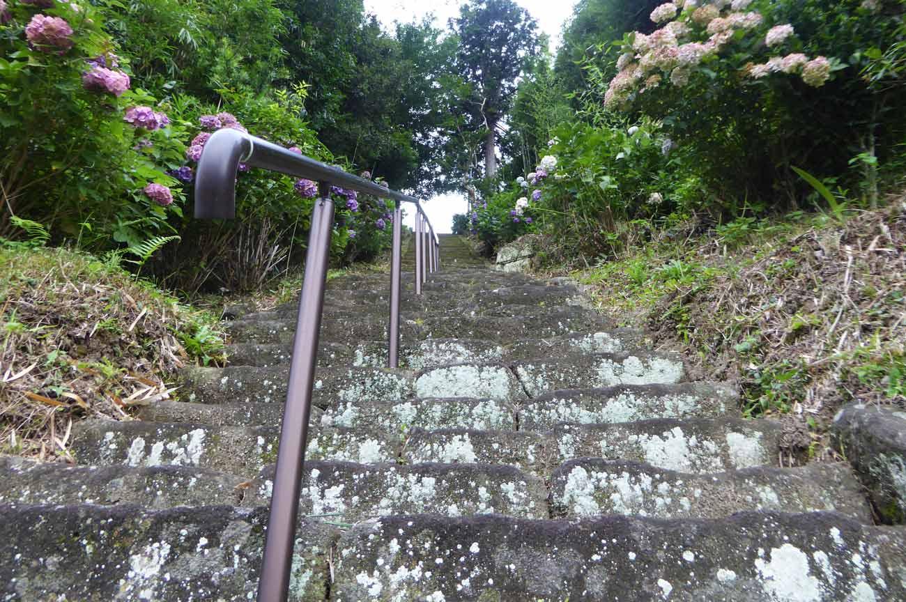 妙蓮寺参道の階段の画像