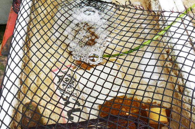 魚清の活トコブシの画像