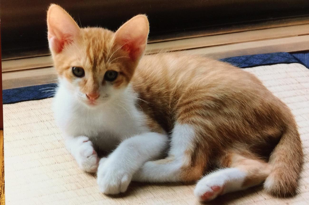 子猫1の画像