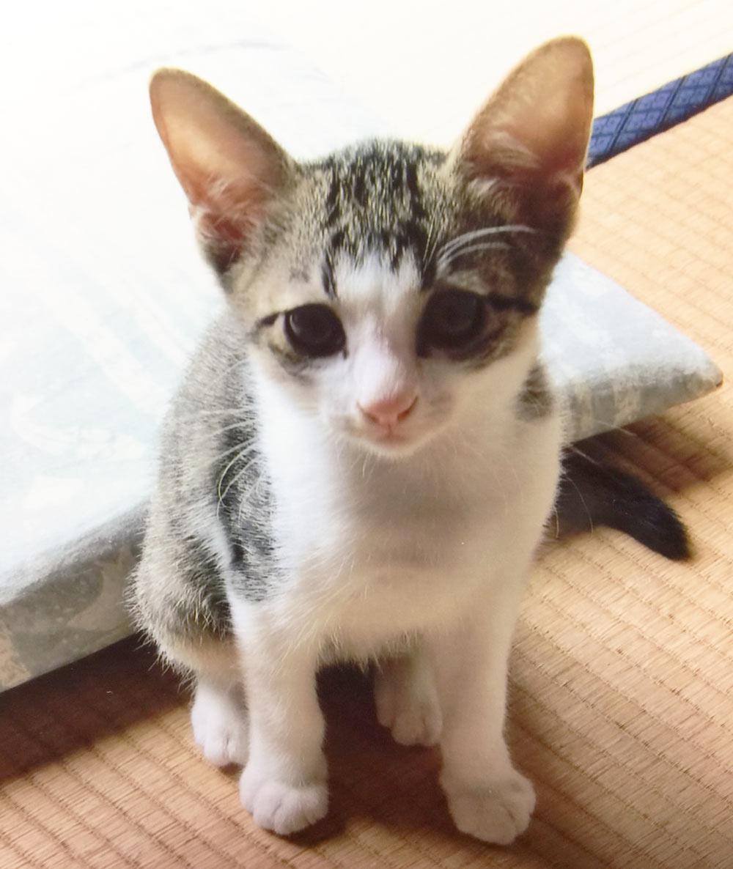子猫2の画像