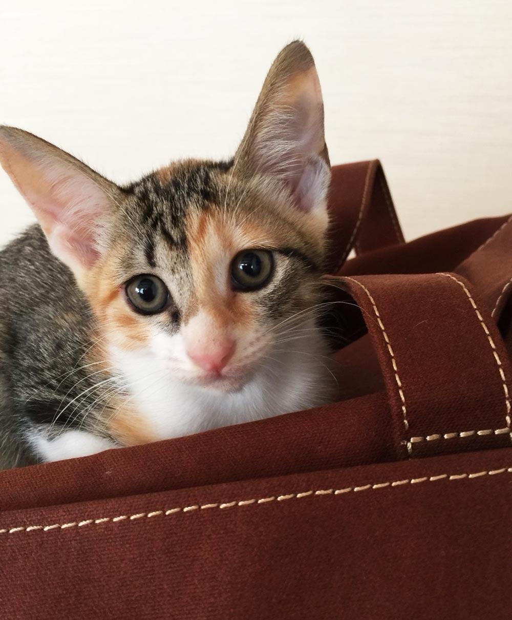 子猫3の画像