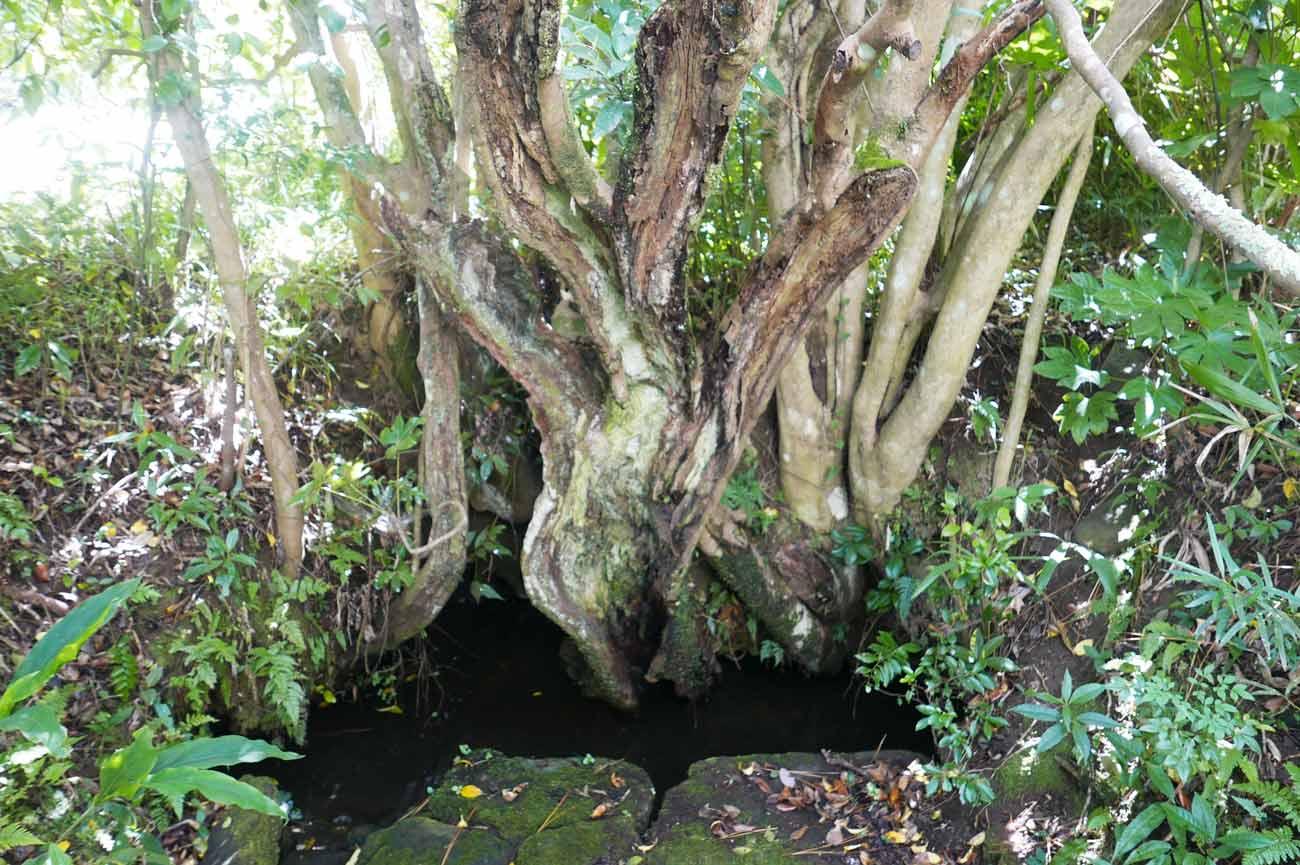 椿の井戸の画像
