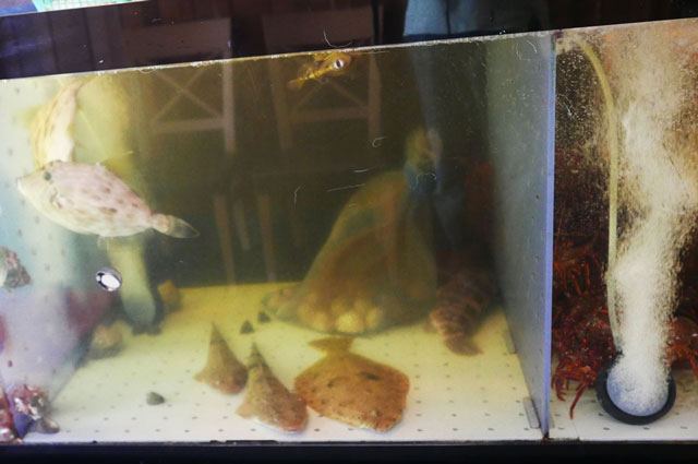 カワハギ、ヒラメ・マゴチの活魚の画像