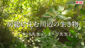 【房TUBE】房総に住む川辺の生き物