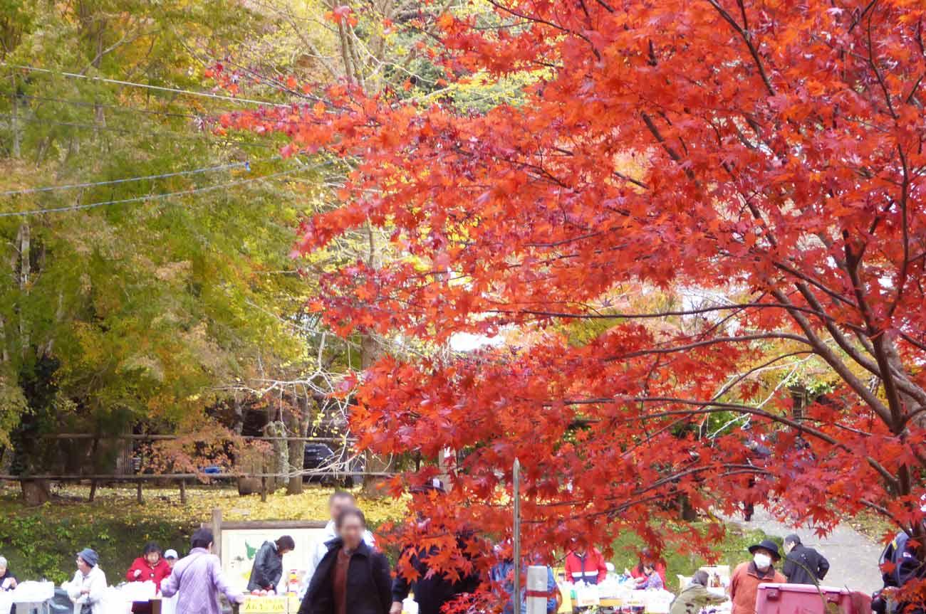 小松寺のもみじ祭りの露天