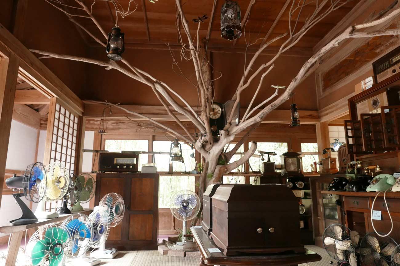 木の展示品の画像