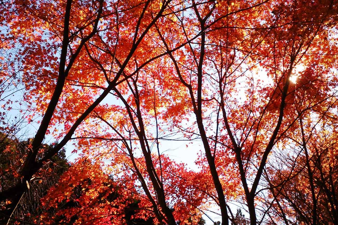 沢山不動堂前の紅葉の画像
