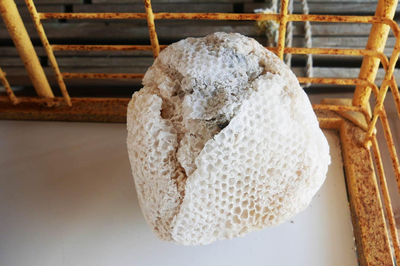 蜜蜂の巣の画像