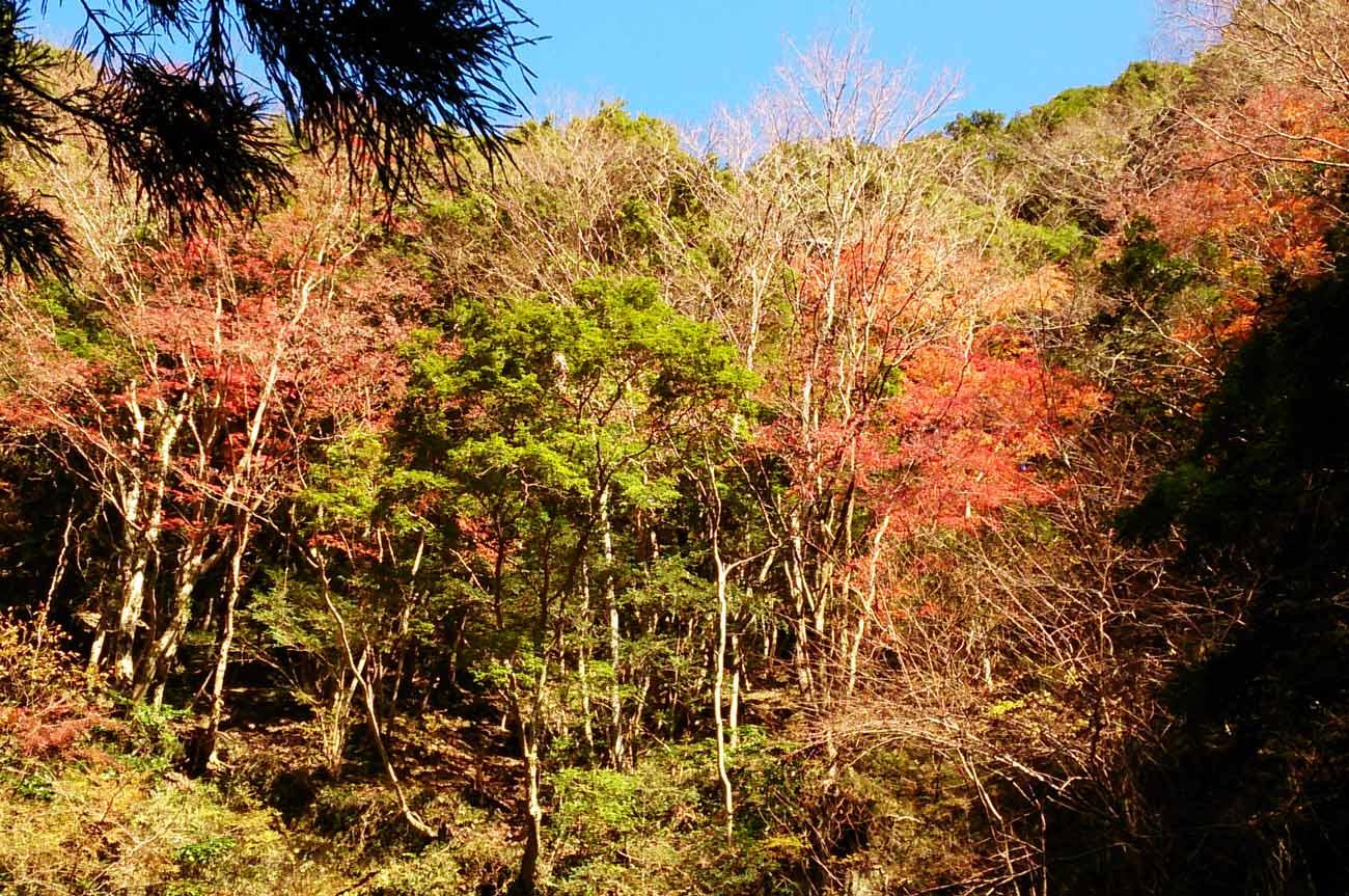 四方木不動滝の上の紅葉の画像
