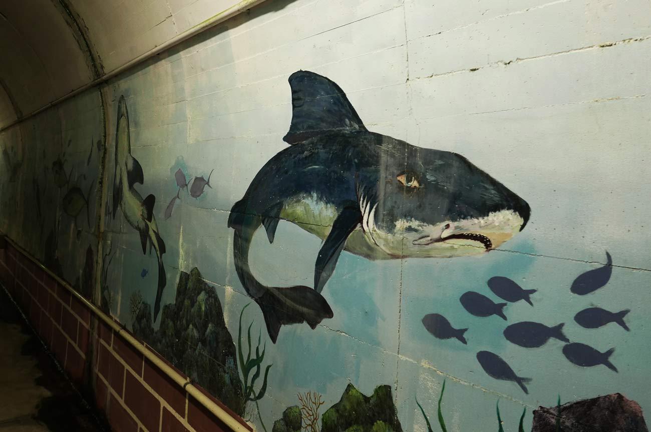 サメの壁画