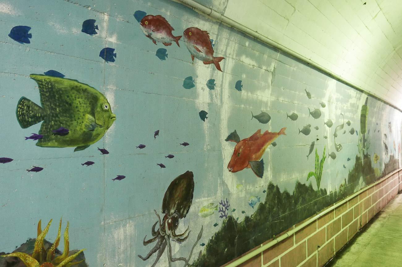 ホウボウとイカの壁画