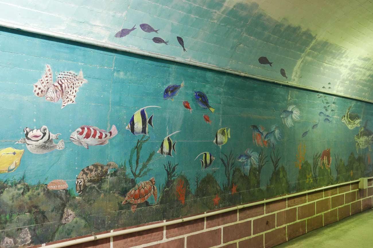 ミノカサゴ、ハリセンボンの壁画