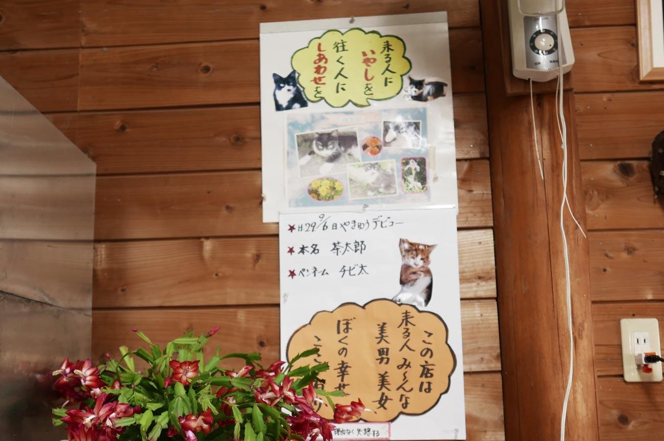 猫の里親募集のチラシ