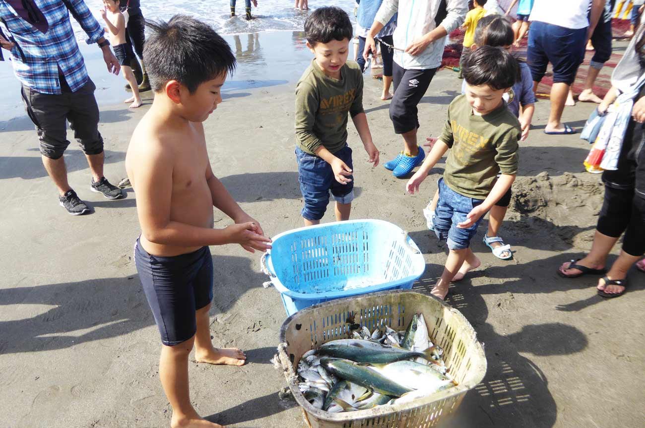 地引網で獲れた魚の画像