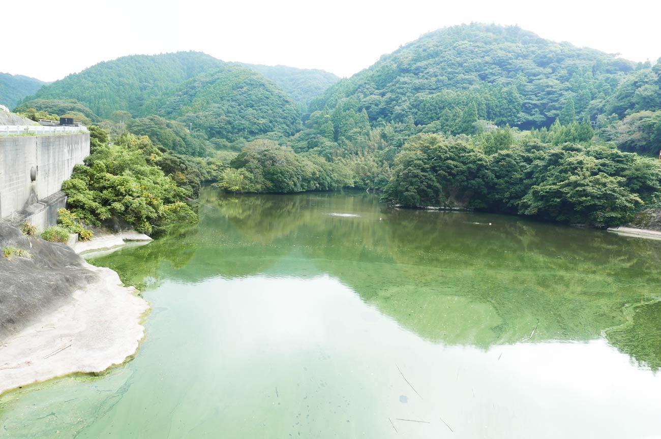 小向ダム堰堤から上流部の画像