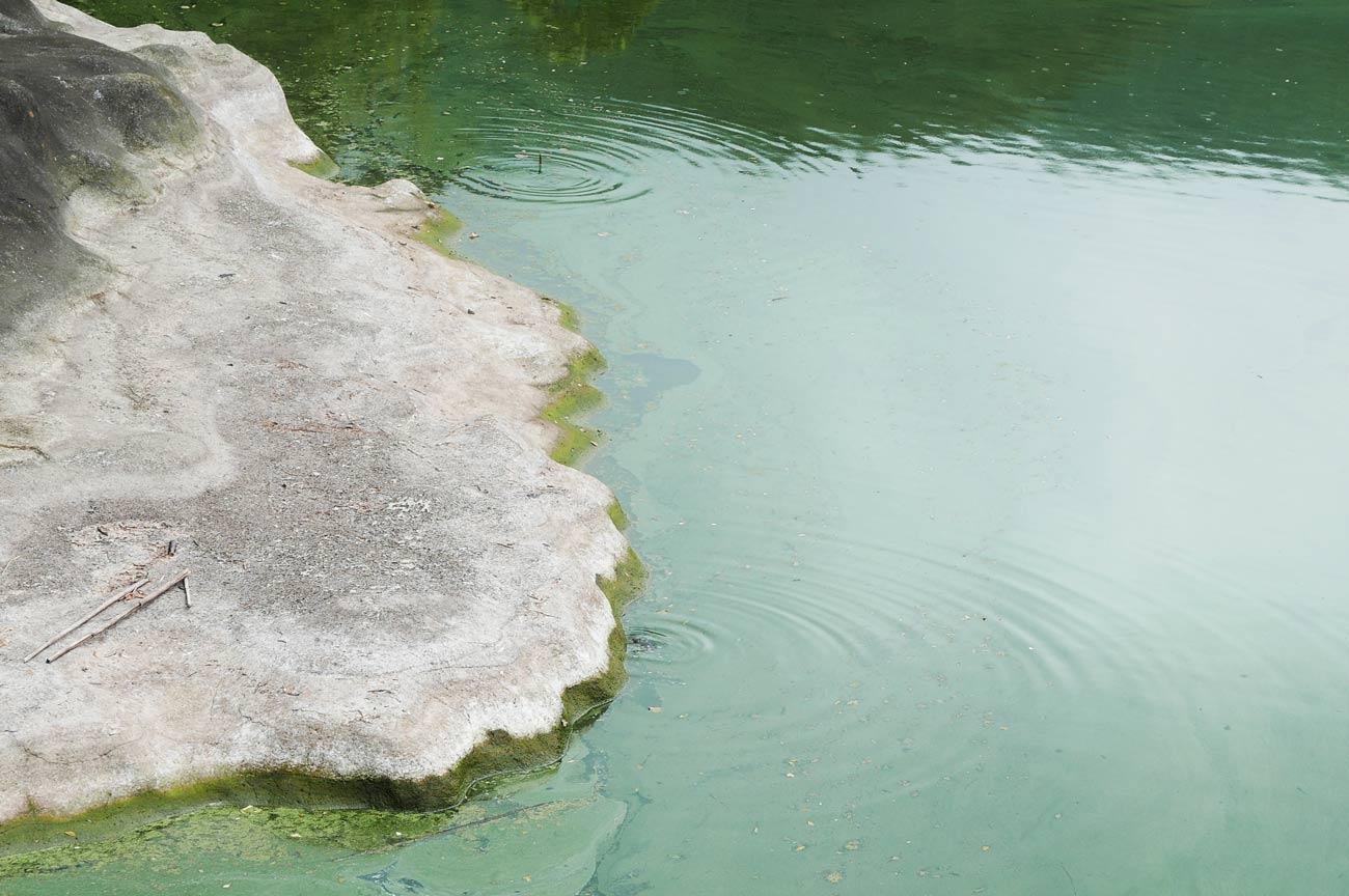小向ダムの鯉の画像