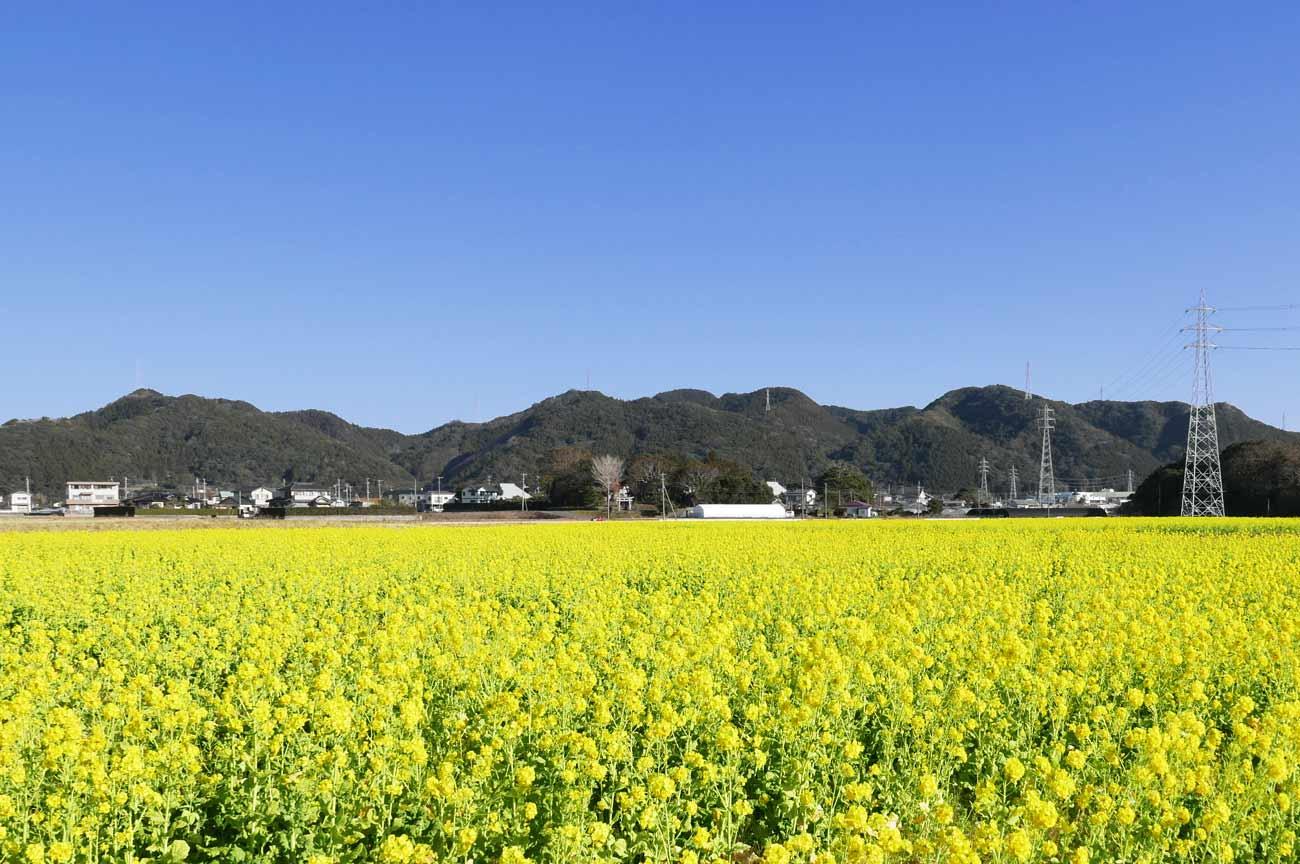菜な畑ロードの画像