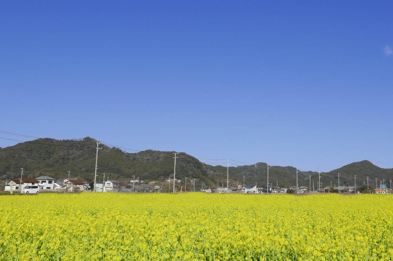 菜な畑ロード北側の画像
