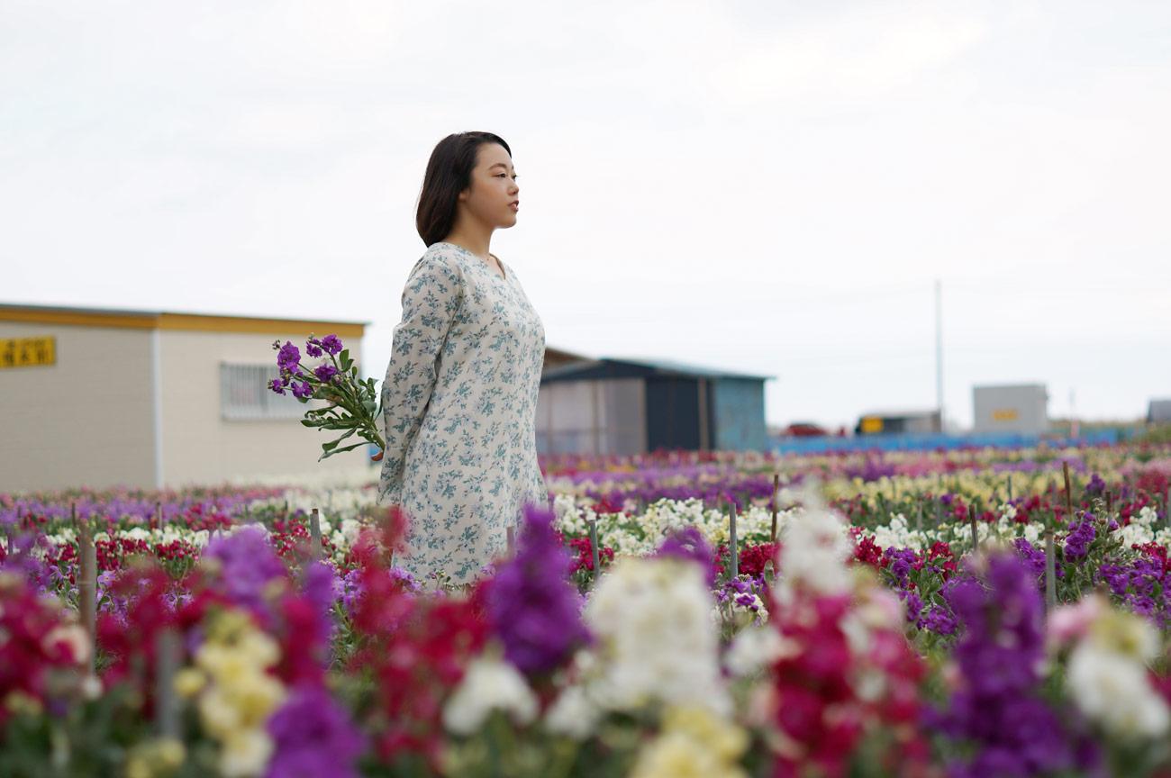 千倉 白間津の花畑から海を望む