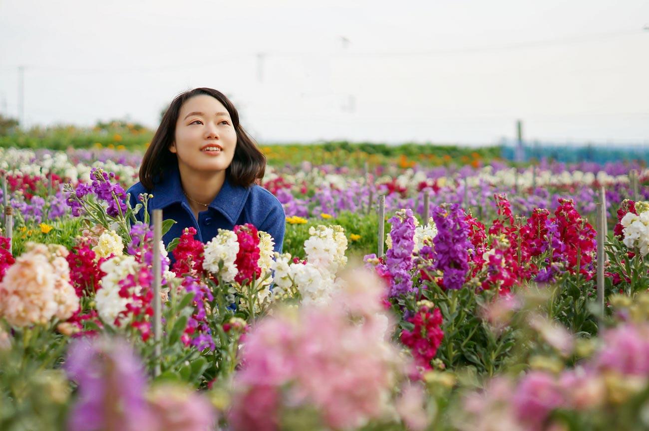 千倉 白間津の花畑からの眺望