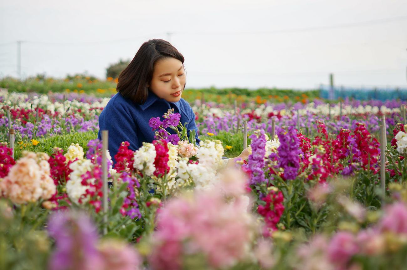 千倉 白間津の花畑で花とたわむれる女性
