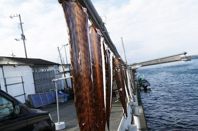 相浜港のうつぼの干物(表面)