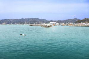 保田港の釣り