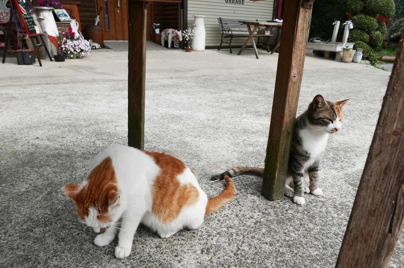 須藤牧場の招き猫