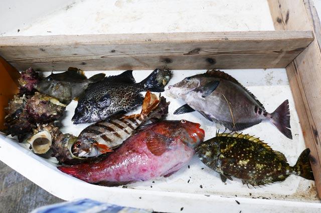 今日の魚の画像